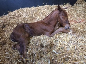 "Equiano Colt aptly named ""Paddy"" after being born on St Patrick's Day"