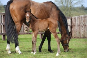 Exceed and Excel filly at two days old