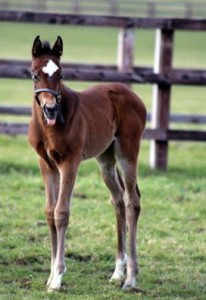 Swiss Spirit Filly at 16 days old